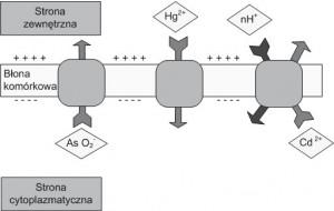 Biologiczna aktywność srebra i jego zastosowanie w medycynie