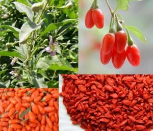 Goji - recepta na zdrowie i długowieczność
