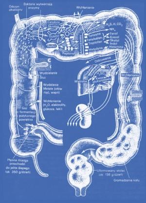 Oczyszczanie ciała z toksyn - cz2