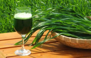 Trawa jęczmienna – Zalety i właściwości zdrowotne