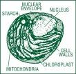 Chlorella i jej zalety